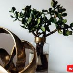 Jade Plant Crassula Ovata Care Growth, Propagation, & Uses- FAQs